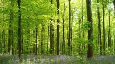Forêt de Bourrus