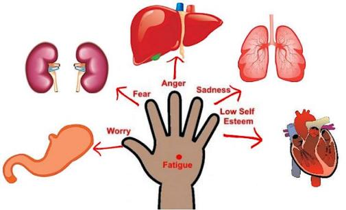 jin shin Jyutsu organes reliés aux doigts de la main
